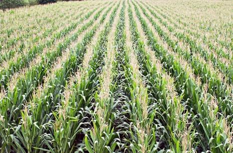 Stop opposing GMOs, Nobel laureates say | AP HUMAN GEOGRAPHY DIGITAL  STUDY: MIKE BUSARELLO | Scoop.it
