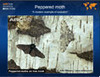 ARKive Education - Teaching resources | evolution & education | Scoop.it