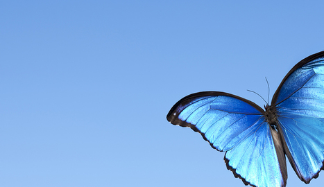 Butterfly-Inspired Building | Biomimicry | Scoop.it
