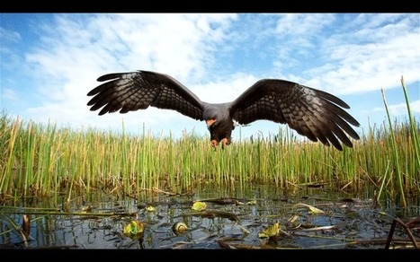 14 TED talks that show the power of conservation photography   Photography News Journal   Scoop.it