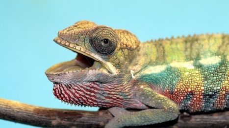 should people be allowed to keep exotic pets