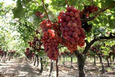 Vin: les Américains deviennent les premiers consommateurs mondiaux devant les Français | Le commerce du vin, entre mythe et réalité | Scoop.it