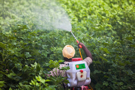 Mutant Crops Drive BASF Sales Where Monsanto Denied: Commodities | AnnBot | Scoop.it