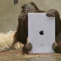 These Orangutans Play with iPads | Preschool | Scoop.it