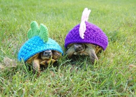 Shell suit fashion gets tortoise twist | Radio Show Contents | Scoop.it