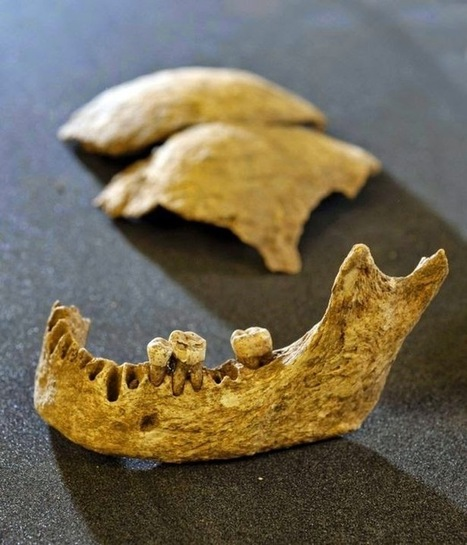 The Archaeology News Network: Skeleton linked to Irish Viking king | Historical Updates | Scoop.it