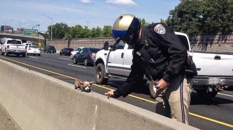 Chihuahua Rescue on California Highway Creates Social Media Sensation - ABC News | Social Media Article Sharing | Scoop.it
