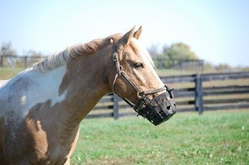 Planning a Diet for a Laminitic Horse | Equine matters | Scoop.it
