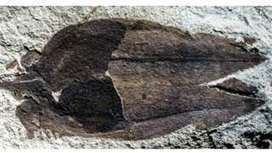 Fossil fruit from 52 million years ago revealed - BBC News   Food for Foodies   Scoop.it