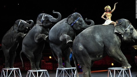 Famed Ringling Bros. circus closing | U.S HISTORY SHACK : MIKE BUSARELLO | Scoop.it