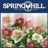 My Garden- Spring Hill Nursery