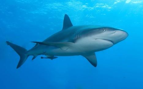 Map of shark attacks worldwide - Australian Geographic | Blunnie's Geo Portfolio | Scoop.it