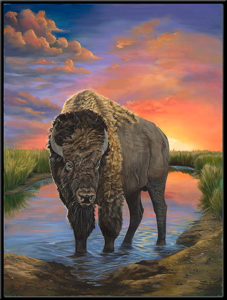 """American Bison 12"""" x 16""""  Buffalo print 