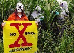 OGM : clash au Haut comité pour les biotechnologies - Libération | Agribusiness | Scoop.it