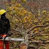 Community Tree Recovery