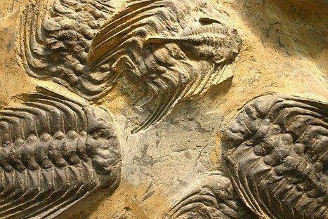 Resultado de imagen de El Suceso K T extinciones masivas
