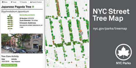 NYC Parks Street Tree Map | Navigate | Scoop.it