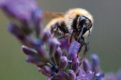 Les insectes pollinisateurs vont très mal | Environnement et développement durable, mode de vie soutenable | Scoop.it