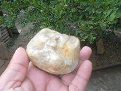 Dinosaur molar found in Peruvian Amazon region | Palaeontology News | Scoop.it