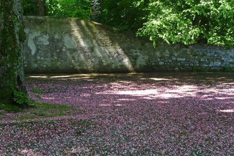 Un tapis de pétales | The Blog's Revue by OlivierSC | Scoop.it