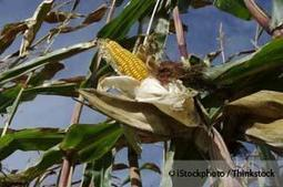 How Monoculture Threatens the Future of Food | Earth Citizens Perspective | Scoop.it