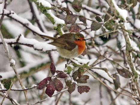 Too cold for comfort: British weather having a serious effect on wildlife | CLIMATE CHANGE WILL IMPACT US ALL | Scoop.it