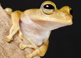 Biodiversity: Amazon frogs galore | AJC's Frogroom | Scoop.it
