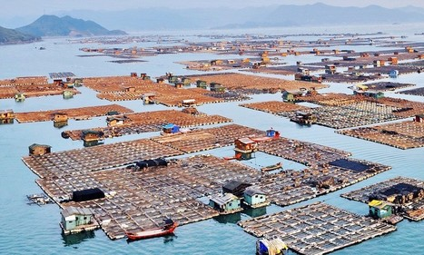 China's floating fishing cities home to 7,000 'gypsies of the sea' | All about water, the oceans, environmental issues | Scoop.it