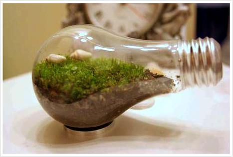 Lightbulb Terrariums and Planters | HTM_DIY - Artesanías | Scoop.it