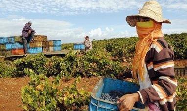 Maroc : 200 millions d'euros de la BEI pour soutenir les entreprises agricoles et de la bio-économie