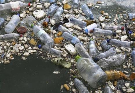La bacteria que come plástico   Era del conocimiento   Scoop.it