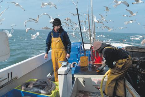 Contre la surpêche, il crée une plateforme de vente de poisson en circuit court | Coopération, libre et innovation sociale ouverte | Scoop.it