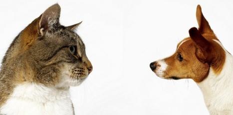 Propriétaire de chat vs propriétaire de chien : qui est le plus intelligent ?   CaniCatNews-actualité   Scoop.it