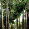 le tourisme en Martinique