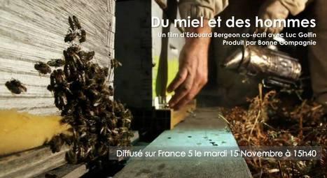 Du miel et des hommes @edouardbergeon | Gastronomy & Wines | Scoop.it