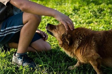 Dogs Help Teens Recover From Mental Health Disorders | animals and prosocial capacities | Scoop.it
