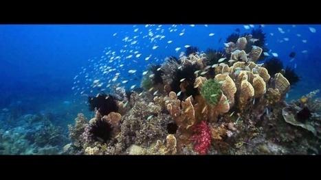 Vidéo HD | Philippines - Voyage plongée sur les récifs vierges des Visayas ! | Plongeurs.TV | Scoop.it