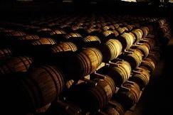 Chênes, guerre, vin et politique. | BenWino | Scoop.it