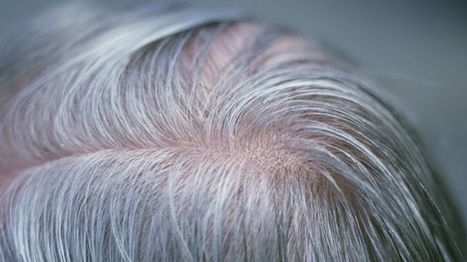 BBSRC funded: Grey hair gene discovered by scientists | BIOSCIENCE NEWS | Scoop.it