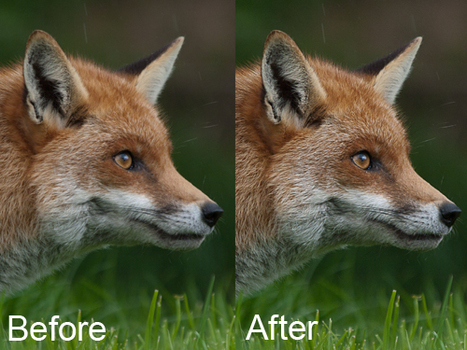 Take control sharpening in Photoshop | Digital-Photography-School | Photography & Photographers | Scoop.it