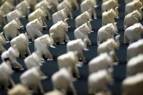Google prié d'effacer les publicités pour l'ivoire ou la graisse de baleine | WEBOLUTION! | Scoop.it