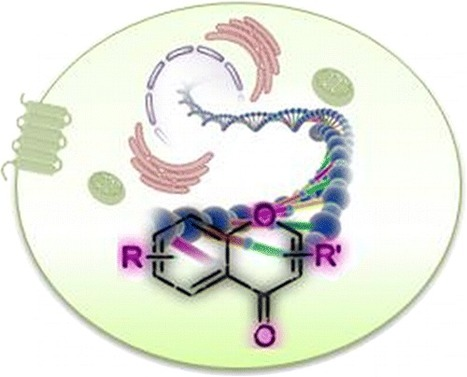Chromone: A Valid Scaffold in Medicinal Chemistry - Chemical Reviews   Flossing & Health   Scoop.it