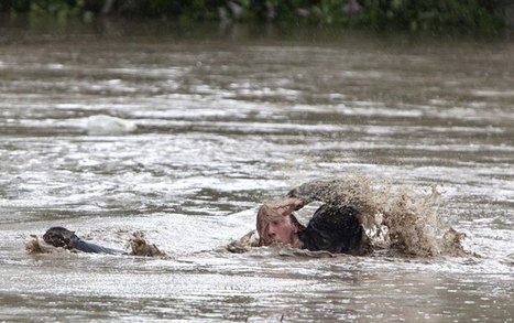 Dramatic photos of cat, owner swimming to safety ... - Global News | Cats Cat History | Scoop.it