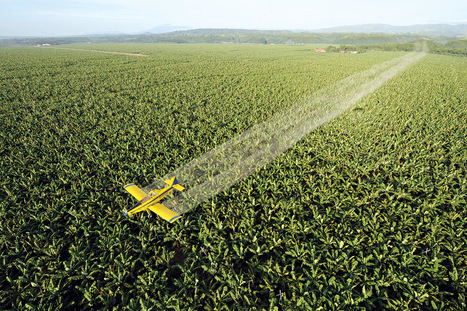 Gene-silencing spray lets us modify plants without changing DNA | Agrarforschung | Scoop.it