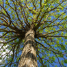 Bozacki Lawn Care & Tree Service: full lawn care service in Gulfport FL