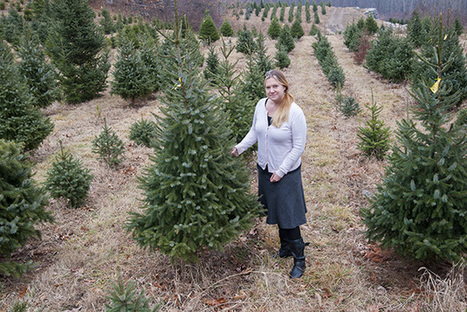 Big Data and the Science of the Christmas Tree   Implications of Big Data   Scoop.it
