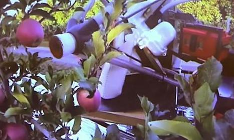 SRI Spin-off Abundant Robotics Developing Autonomous Apple Vacuum | The Robot Times | Scoop.it