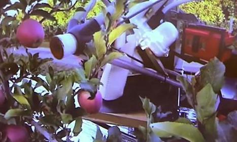SRI Spin-off Abundant Robotics Developing Autonomous Apple Vacuum | The Robot Times | Scoop.it
