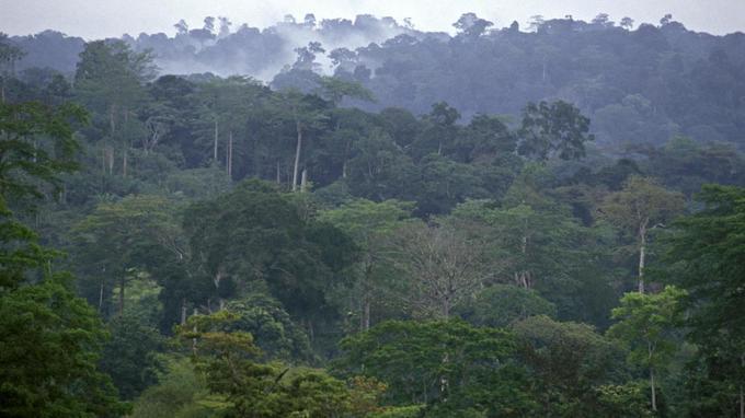 Les forêts africaines sont-elles en danger comme celle de l'Amazonie ?