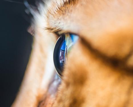 Les captivantes macrophotographies d'œil de chats d'Andrew Marttila ! | Graine de Photographe The Blog | Photo 2.0 | Scoop.it